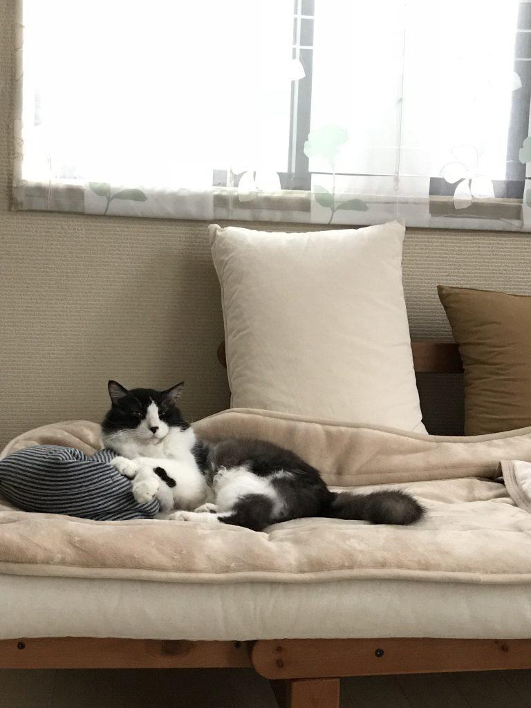 ソファーに横になるミック